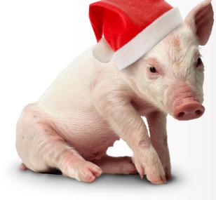 christmas_pig1