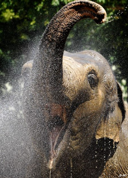 elephantap1807_468x653